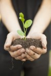 Gardening idiom: sow the seeds of