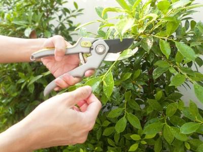 Pruning a bush: why copy-editing is like gardening