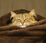 Hygge for cats
